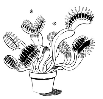 Venus Fly Trap Coloring Page #4