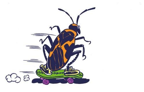 Milkbug