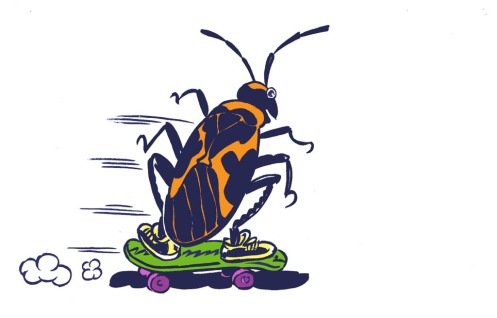 Milk Bug illustration for Sarah's Science